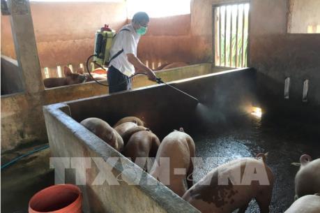 Thành lập chốt kiểm dịch lưu động ngăn chặn dịch tả lợn