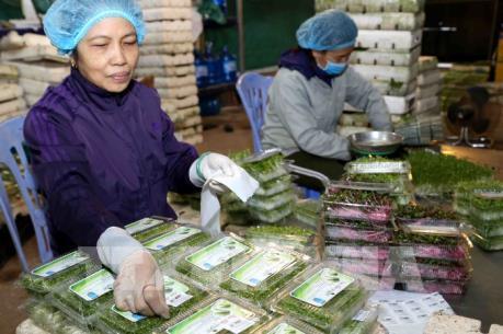 Cơ hội cho ngành rau quả Việt Nam