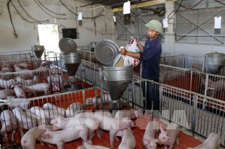 Tây Ninh xây dựng chuỗi an toàn dịch bệnh trong chăn nuôi