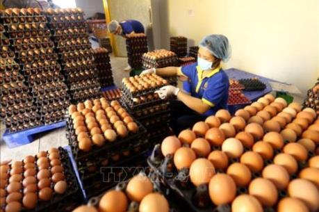 Lần đầu tiên trứng gà tươi ăn liền được cung ứng ra thị trường