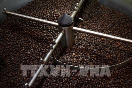 Giá cà phê Robusta leo lên mức cao nhất của một năm rưỡi qua