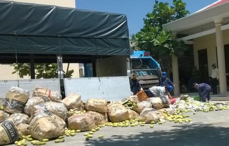 Tiêu hủy trên 6,6 tấn xoài tươi nhập khẩu trái phép từ Campuchia