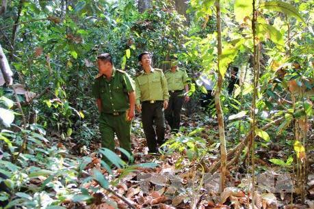 Tây Ninh: Trên 58.000 ha rừng ở dự báo cấp cháy rừng cực kỳ nguy hiểm
