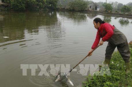 Chưa xác định nguyên nhân cá chết bất thường ở Thái Nguyên