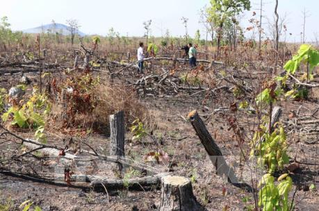Đắk Lắk: Hàng chục hécta rừng bị chặt phá, lấn chiếm sang nhượng trái phép