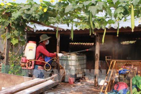 Xuất hiện dịch lở mồm long móng trên đàn lợn ở Bà Rịa – Vũng Tàu