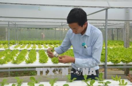 Bí quyết trồng rau thủy canh cho thu nhập gần 400 triệu đồng/năm