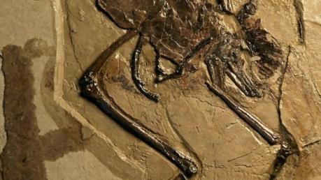 Phát hiện hóa thạch chim cổ đại còn trứng nguyên vẹn bên trong