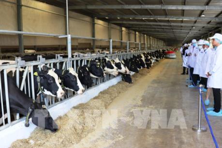 Vinamilk khánh thành trang trại bò sữa lớn nhất châu Á