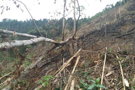 Điều tra làm rõ vụ chặt phá 3,3 ha rừng phòng hộ ở Tiên Yên