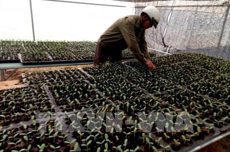 Đầu tư vào nông nghiệp công nghệ cao - Bài 1: Khó tiếp cận nguồn lực