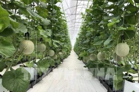 Nông nghiệp thông minh – Bài 1: Những mô hình canh tác hiện đại