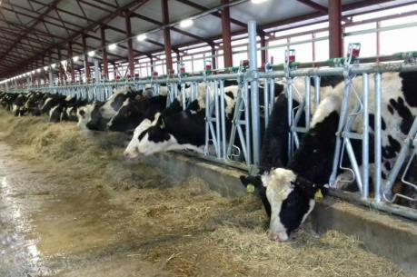 Tập đoàn TH dự kiến cuối năm 2020 đàn bò đạt 137.000 con