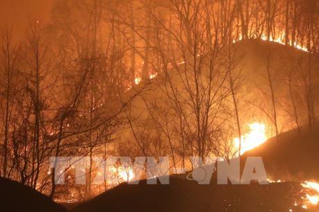 Đại sứ quán Việt Nam tại Hàn Quốc theo sát tình hình cháy rừng ở Goseong