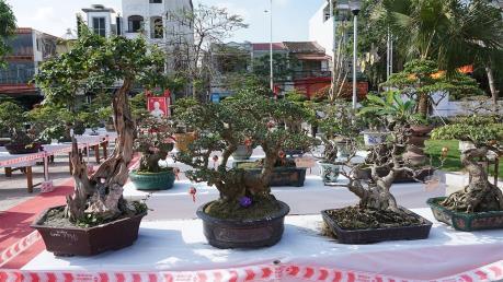 Ứng dụng công nghệ cao trồng hoa và cây cảnh