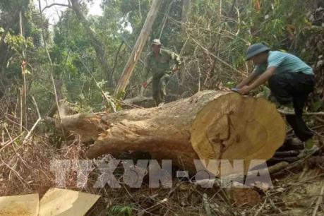 Bắt tạm giam 4 cán bộ liên quan vụ phá rừng quy mô lớn ở huyện Ea Kar, Đắk Lắk