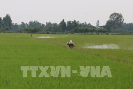 Các địa phương phòng trừ dịch hại trên lúa Đông Xuân và Hè Thu