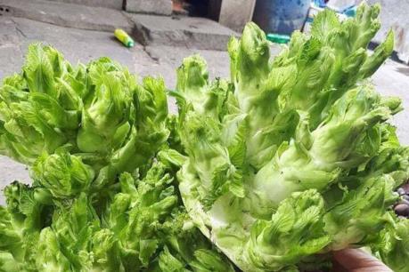Tràn lan rau quả gắn mác Việt dù xuất xứ không rõ ràng