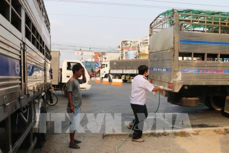 Dịch tả lợn châu Phi và kinh nghiệm phòng chống từ Tp. Hồ Chí Minh