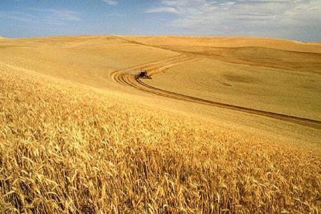 Giá nông sản Mỹ sụt giảm