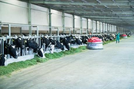 Hệ thống trang trại đạt chuẩn Global G.A.P lớn nhất Châu Á của Vinamilk