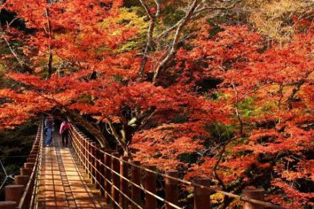 Những địa điểm phải ghé thăm khi đến Ibaraki