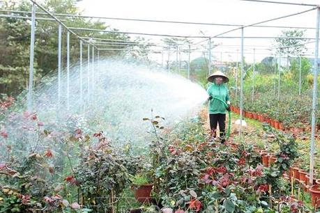 Thu nhập cả tỷ đồng từ trồng hoa, cây cảnh