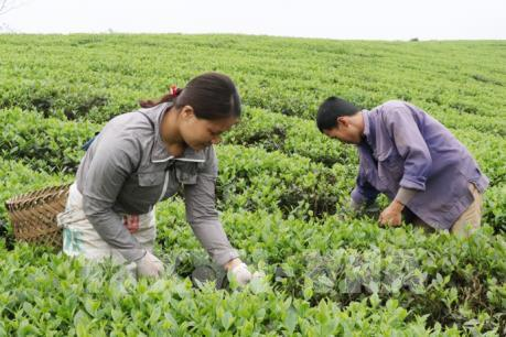 Đặt mục tiêu ít nhất 50 sản phẩm của Thái Nguyên đạt chuẩn OCOP