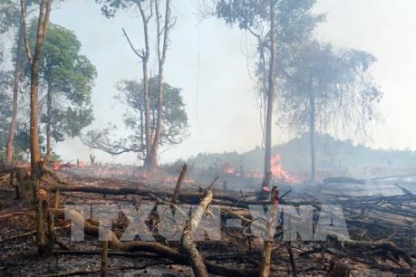 Lửa bùng phát tại rừng phòng hộ Hòn Đất, Kiên Giang