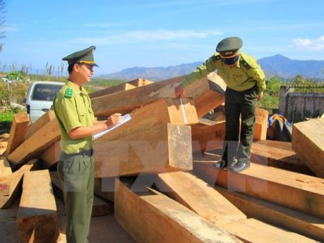Xử phạt 245 triệu đồng do vận chuyển trái phép hơn 6.000 m3 gỗ