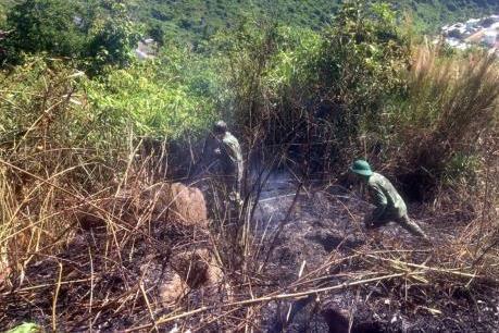 Cháy lớn đã thiêu rụi 6 ha rừng đặc dụng Đèo Cả