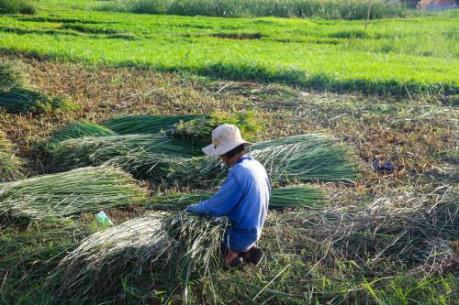 Giúp nhà nông yên tâm cách ly phòng, chống dịch COVID-19