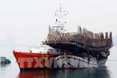 Đà Nẵng cứu hộ thành công 52 thuyền viên gặp nạn trên biển