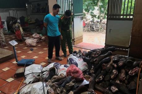 Hà Nội thu giữ 3 tấn chân bò và nội tạng động vật nhập lậu