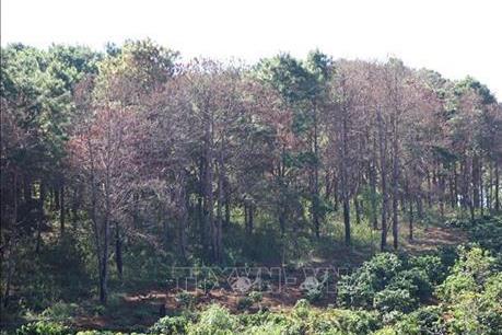 Ban Quản lý rừng phòng hộ  Ia Meur làm mất hơn 550 ha rừng