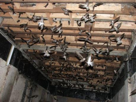 Bàn cách phát triển bền vững nghề nuôi chim yến