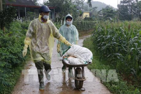 Ban Bí thư ban hành Chỉ thị về phòng, chống bệnh dịch tả lợn châu Phi