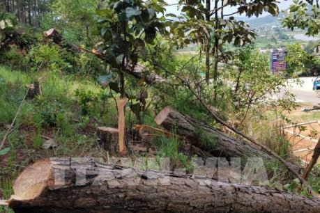 Bắt quả tang 4 đối tượng phá rừng chiếm đất ở huyện Lâm Hà, Lâm Đồng
