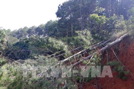 Báo động nạn phá rừng chiếm đất ở Tây Nguyên