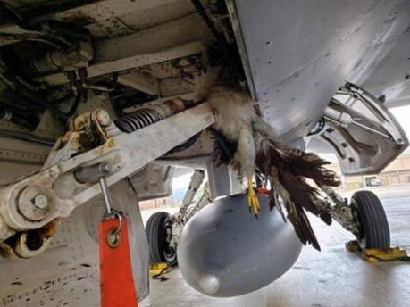Mỹ thiệt hại hàng triệu USD chỉ vì... một chú chim