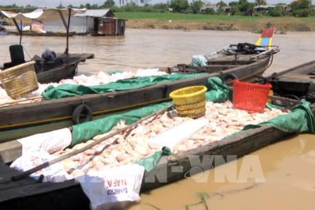 Hàng chục bè cá bất ngờ chết trắng trên sông La Ngà