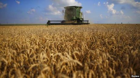Nông nghiệp châu Âu đang bị đe dọa