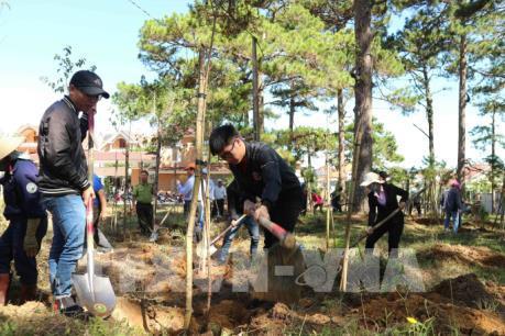 Đà Lạt trồng thêm 6.000 cây thông và mai anh đào