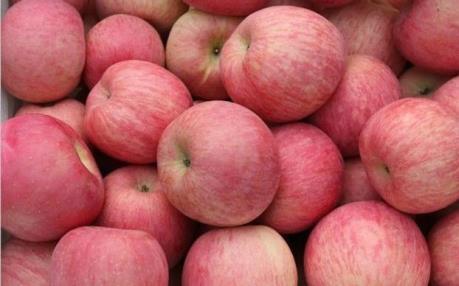 Ấn Độ xem xét dỡ bỏ lệnh cấm nhập khẩu táo và lê Trung Quốc
