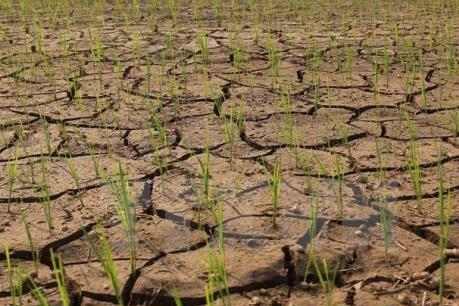 Thừa Thiên-Huế: Hơn 1.200 ha sản xuất vụ Hè Thu có nguy cơ thiếu nước