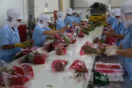 Khoa học công nghệ dẫn đầu vốn đầu tư của Việt Nam ra nước ngoài