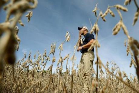 Trung Quốc hoài nghi về kế hoạch giải cứu nông dân trồng đậu tương ở Mỹ