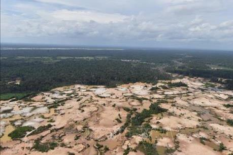 Brazil mất 953.000 ha rừng phòng hộ trong 3 thập kỷ qua