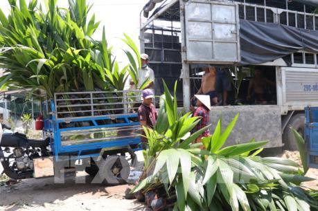 Bến Tre chuyển đổi sang sản xuất cây giống cho thu nhập cao