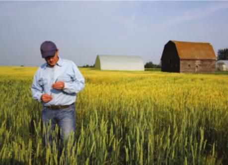 Ngành nông nghiệp Mỹ cần nhiều hơn một gói hỗ trợ tài chính